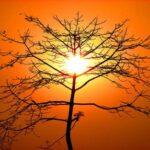 Fornire biocarburante dal sole? Adesso si può