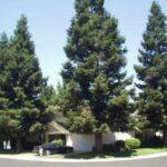 Vuoi risparmiare energia elettrica ed emissioni? Pianta un albero vicino casa tua