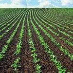 Biocarburanti vs. bioelettricità, quale dei due è più efficiente?