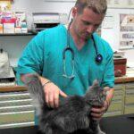 ANMVI: visite veterinarie gratuite per tutto il mese di Marzo
