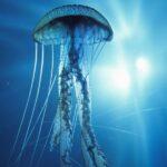 Puntura di medusa: ecco cosa bisogna fare